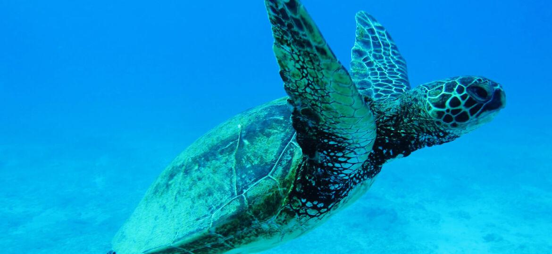 Eco-sostenibilità tartaruga